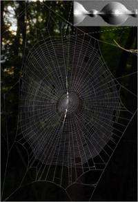 Spider silk glue inspires next-generation technology
