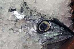 Study: 40 Mediterranean fish species could vanish (AP)