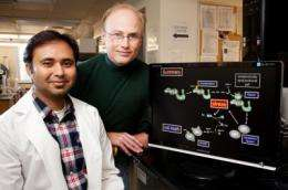 Study discovers how cancer-causing bacterium spurs cell death