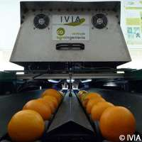 Sweet innovation for citrus fruits