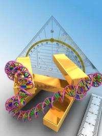 Taking the 3-D measure of macromolecules: