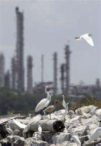 Texas wetland restoration could be model for Gulf (AP)