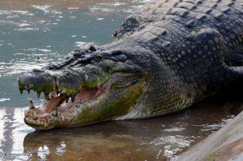 The crocodile was named Lolong after one of the trappers who died of a heart attack on the eve of its capture