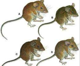 The mice were found in heavily-forested mountain ranges