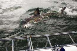 The renowned Durban-based KwaZulu-Natal Sharks Board is now investigating the attacks and plans to catch sharks