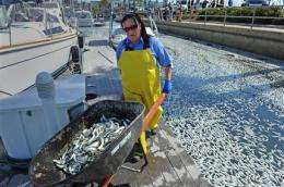 Tons of dead sardines scooped from Calif. harbor (AP)