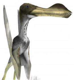 Toothed pterosaur: Tiny fossil fragment reveals giant-but-ugly-truth
