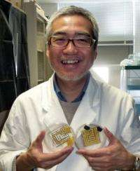 Toshiyuki Nakagaki's work using slime to better understand intelligence has been recognised with