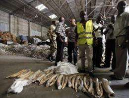TRAFFIC, which runs the ETIS database of illegal ivory trades, said there had been at least 13 large seizures in 2011