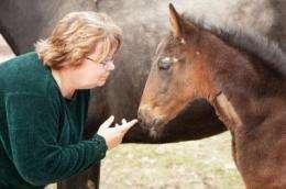 Treating newborn horses: A unique form of pediatrics