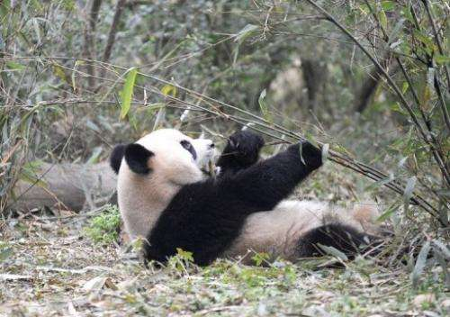 Two giant pandas are set to arrive at Edinburgh Zoo in Scotland on Sunday