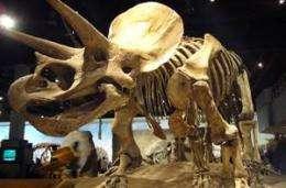 Holes in fossil bones reveal dinosaur activity