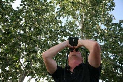 US Ornithologist Marshall Iliff looks at a male robin
