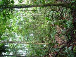 What's so unique about the tropics?