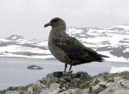 Where Antarctic predatory seabirds overwinter