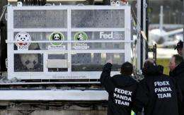 Workers unload travel crates containing giant pandas Tian Tian (sweetie) from a plane at the airport in Edinburgh