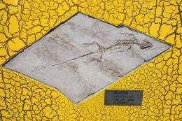 Yabeinosaurus