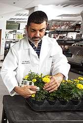 A greener way to fertilize nursery crops