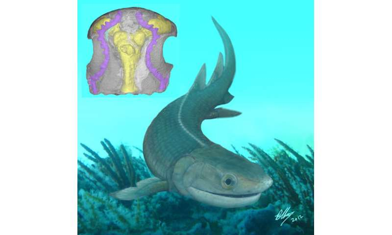 Earliest known finned tetrapod found from the Lower Devonian of China