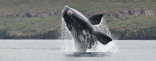 Expedition returns wealth of data on whales, sea lions and birds
