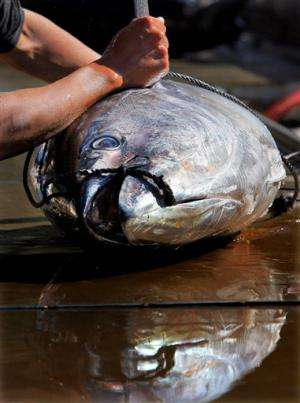 Fisheries nations set to discuss bluefin tuna