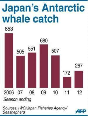 Graphic charting Japan's whale catch in the Antarctic 2006-2012