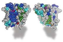 Is it A rock, or is it jell-O? Defining the architecture of rhomboid enzymes