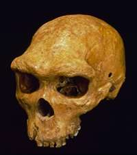 Largest group of fossil humans are Neanderthals after all