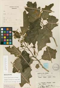Naming new plant species moves online