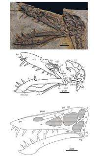 New Scaphognathid Pterosaur found from Western Liaoning, China
