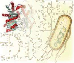 'Promiscuous' enzymes still prevalent in metabolism