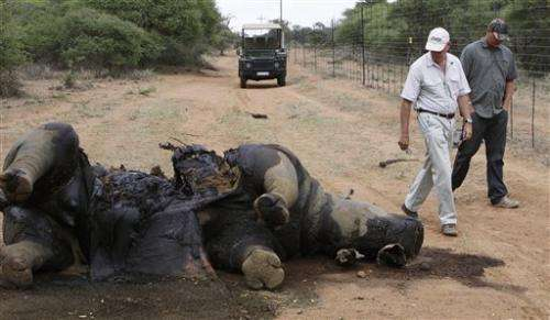 Rhino killings for horns rapidly rise in S. Africa