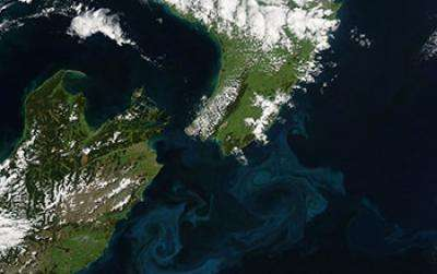 Small marine organisms' big changes could affect world climate