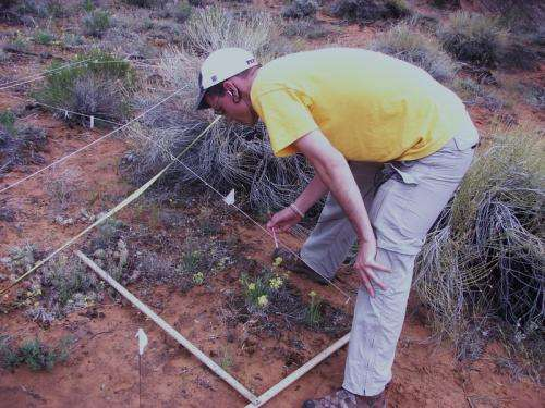 Some plants in arid regions benefit from climate change, study finds