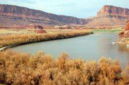Tamarisk biocontrol efforts get evolutionary boost
