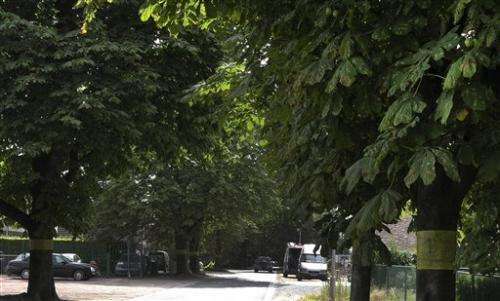 The great chestnut trees of Europe are dying