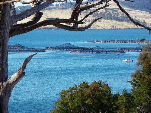 Researchers develop environmental assessment model for southern Tasmanian estuaries