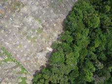 Drone in action for the rainforest