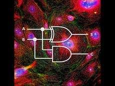 Molecular algebra in mammalian cells