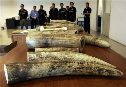 Biggest Asian wildlife traffickers are untouchable