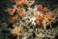 Marine scientists charting the location of North Atlantic deep-sea coral reefs