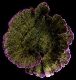 New research finds increased growth responsible for color changes in coral reefs