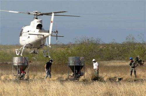 Rat kill in Galapagos Islands targets 180 million