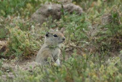 Studies shed light on why species stay or go in response to climate change