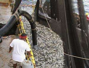 U.S. seafood landings reach 17-year high in 2011, report details