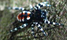 Velvet spiders emerge from underground in new cybertaxonomic monograph