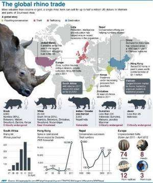 Graphic factfile on the global underground trade in poached rhino parts.