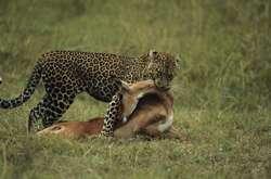 The mathematics behind predator-prey interactions
