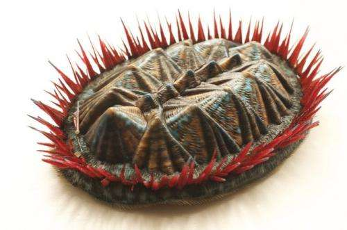 3D printing? Make mine a mollusc