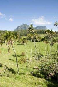 Sympatric speciation contributes to island biodiversity